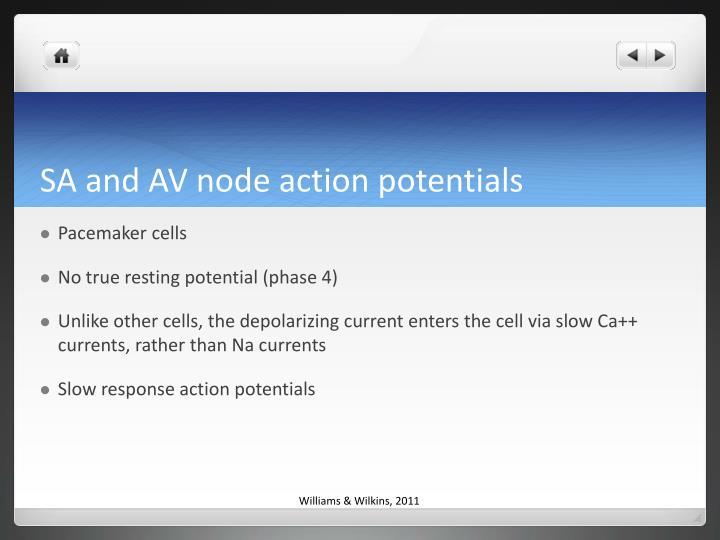 SA and AV node action potentials