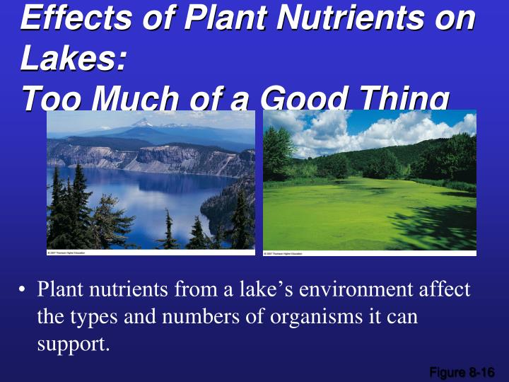 Effects of Plant Nutrients on Lakes: