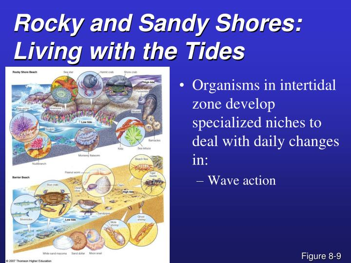 Rocky and Sandy Shores:
