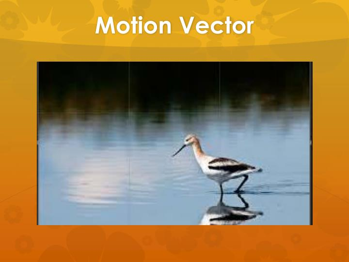 Motion Vector