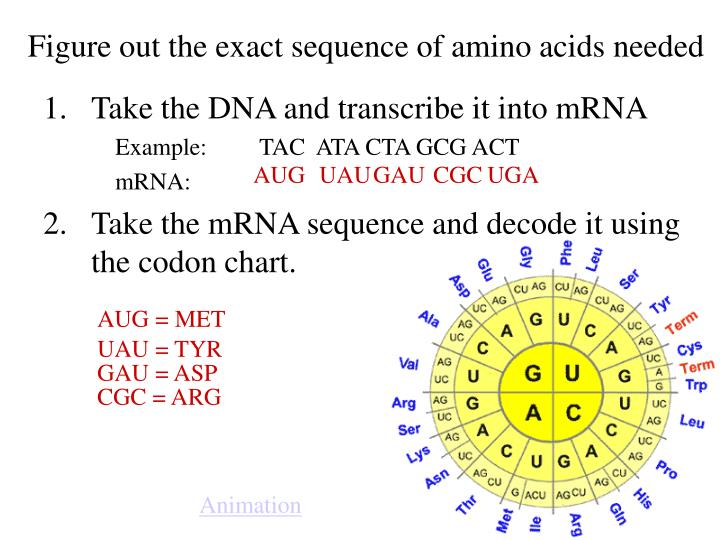 Figure out the exact sequence of amino acids needed