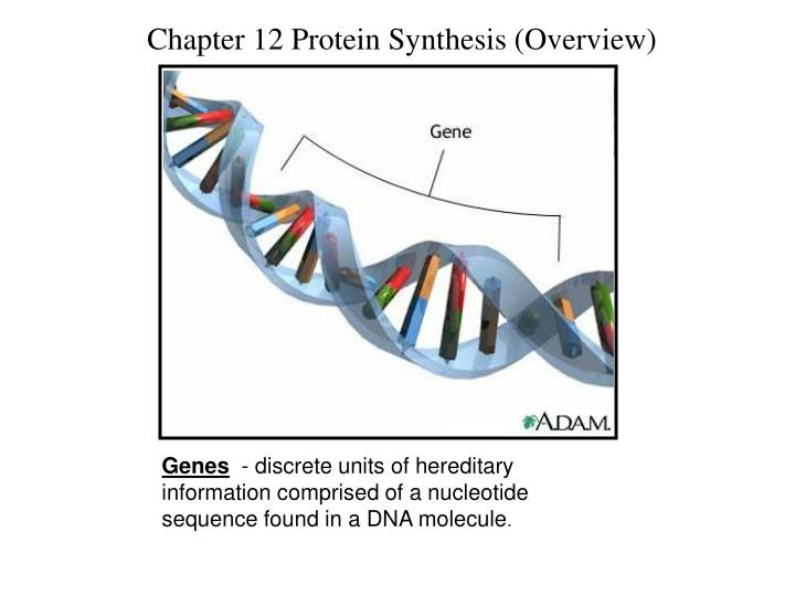 Chapter 12 Protein Synthesis (Overview)