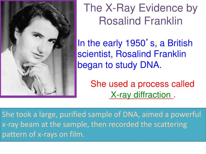 The X-Ray Evidence by Rosalind Franklin