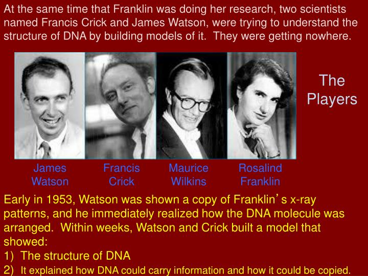 At the same time that Franklin was doing her research, two scientists named Francis Crick and James Watson, were trying to understand the structure of DNA by building models of it.  They were getting nowhere.