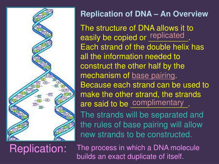 Replication of DNA – An Overview
