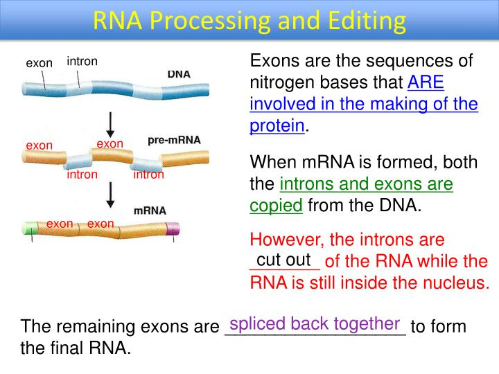 RNA Processing and Editing