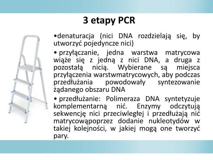 3 etapy PCR