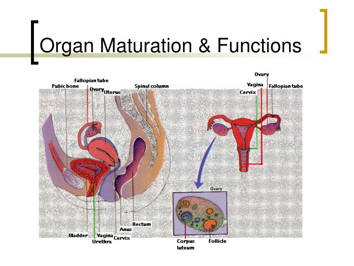 Organ Maturation & Functions