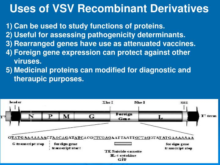 Uses of VSV Recombinant Derivatives