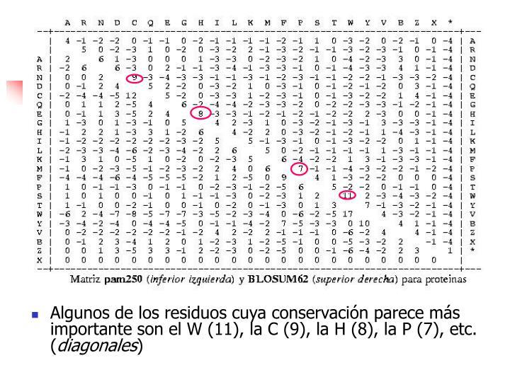 Algunos de los residuos cuya conservación parece más importante son el W (11), la C (9), la H (8), la P (7), etc. (