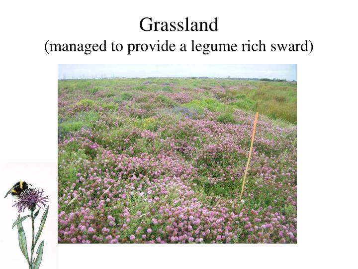 Grassland managed to provide a legume rich sward