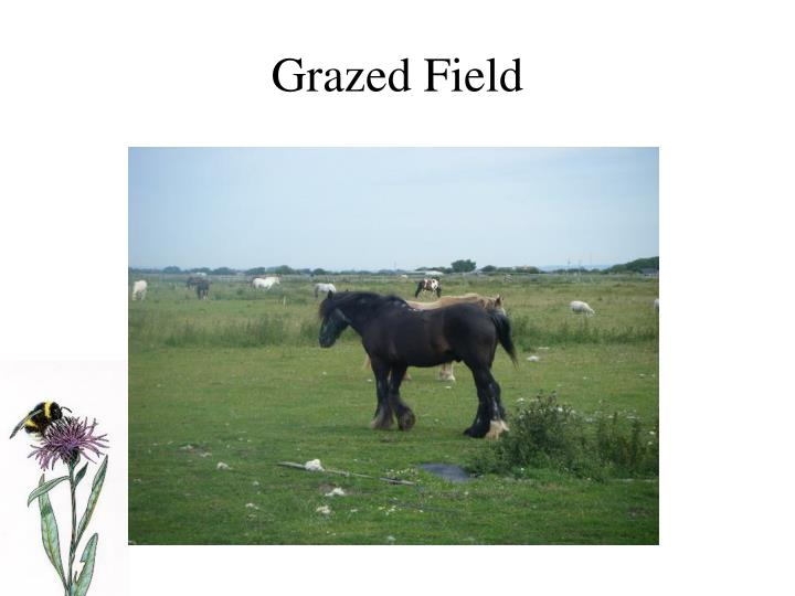 Grazed Field