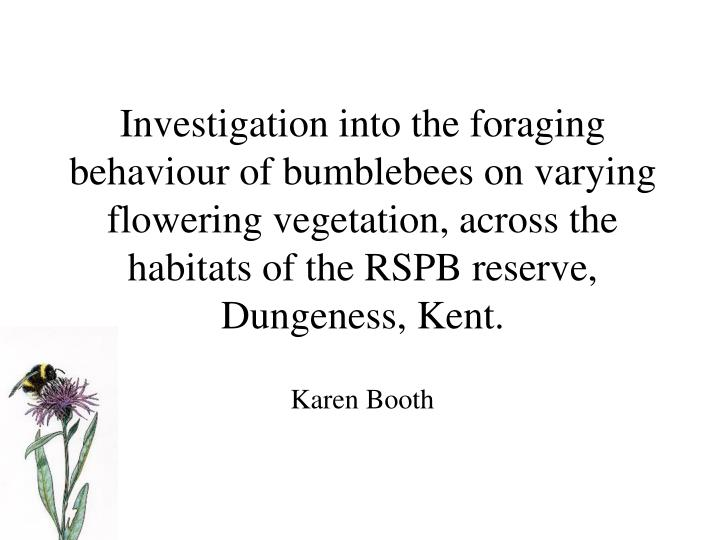 Investigation into the foraging behaviour of bumblebees on varying flowering vegetation, across the habitats of the RSPB reserve, Dungeness, Kent.
