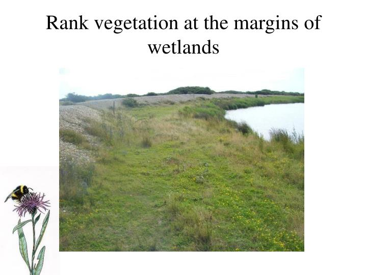 Rank vegetation at the margins of wetlands