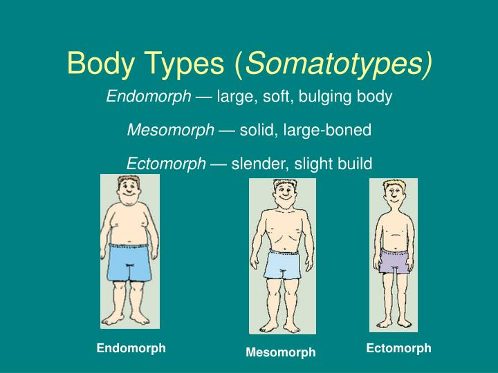 Body types somatotypes