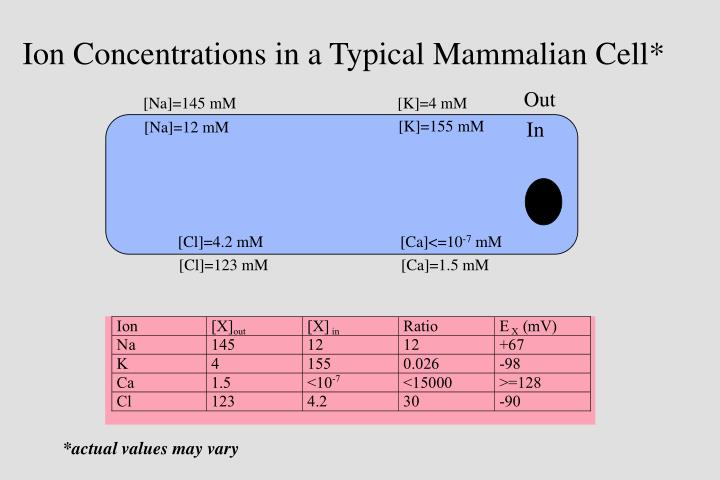 Ion Concentrations in a Typical Mammalian Cell*