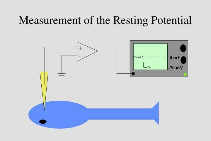 Measurement of the Resting Potential