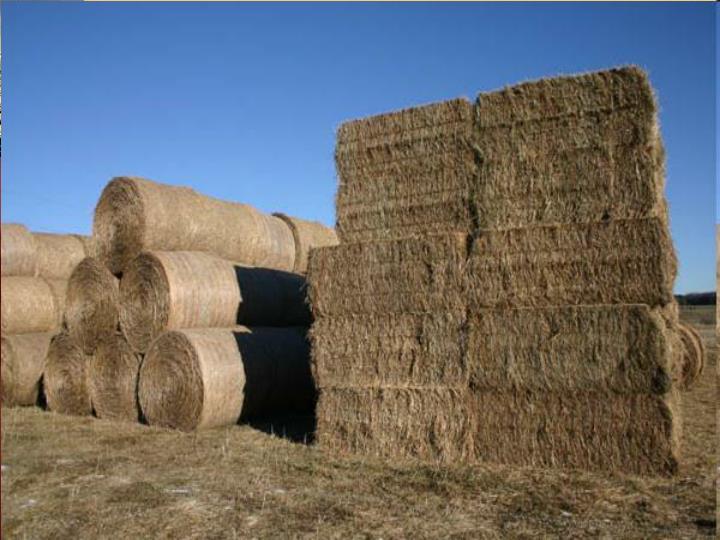 Biomass piles