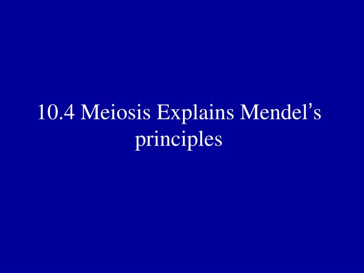 10.4 Meiosis Explains Mendel