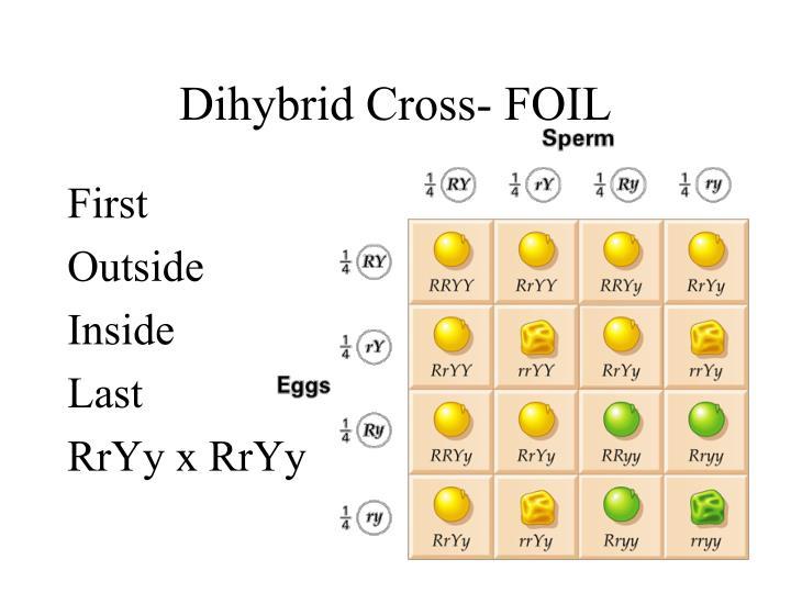Dihybrid Cross- FOIL