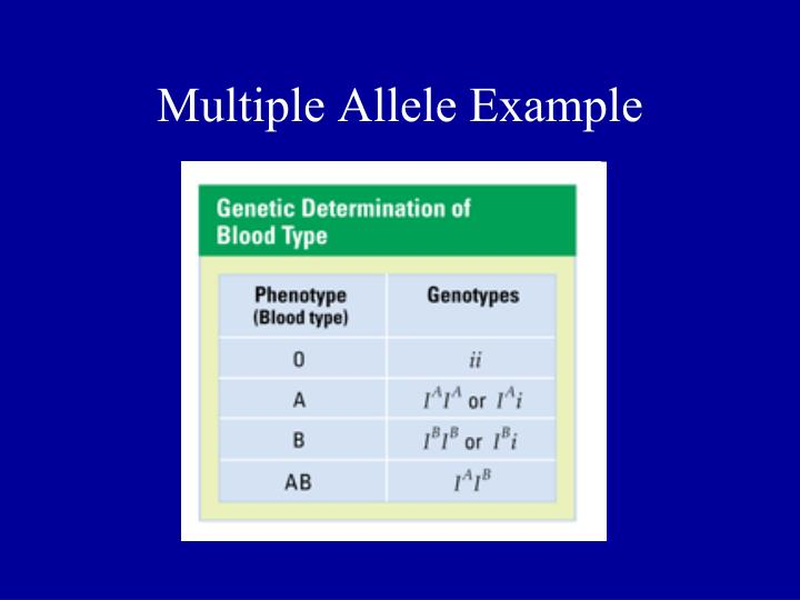 Multiple Allele Example