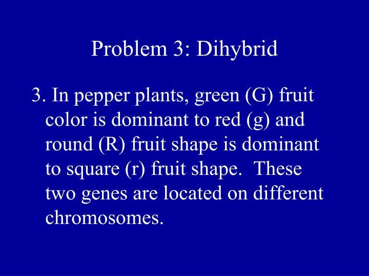 Problem 3: Dihybrid