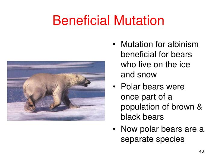 Beneficial Mutation