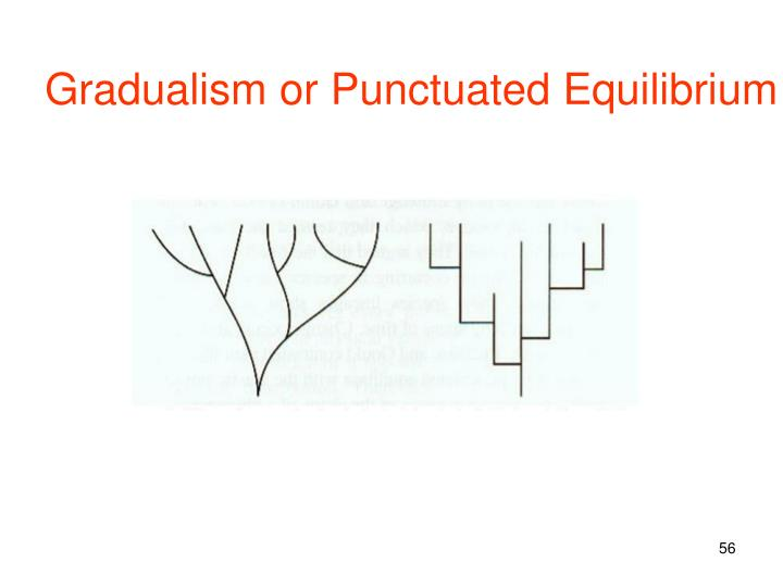 Gradualism or Punctuated Equilibrium