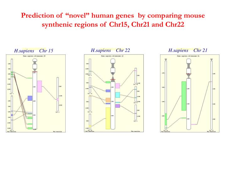 "Prediction of ""novel"" human genes  by comparing mouse synthenic regions of Chr15, Chr21 and Chr22"