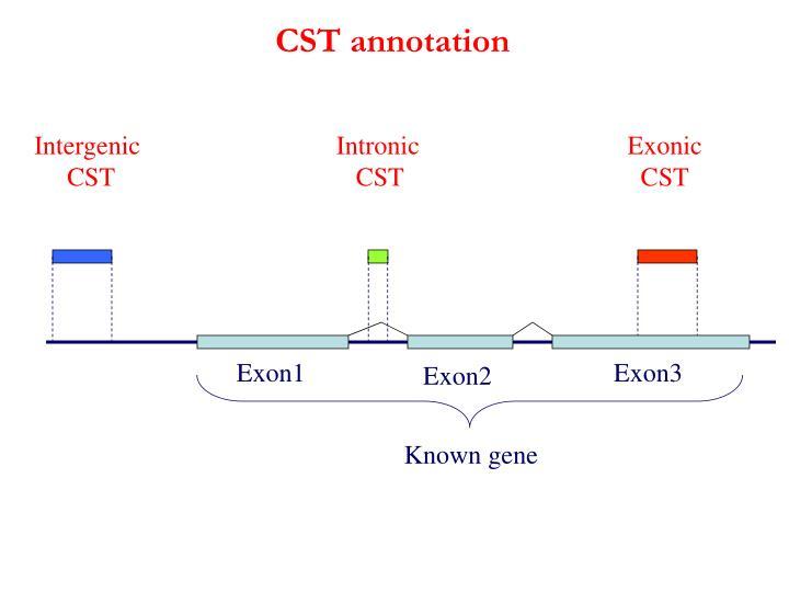 CST annotation