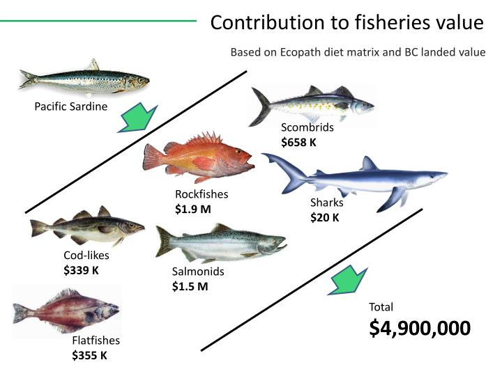 Contribution to fisheries value