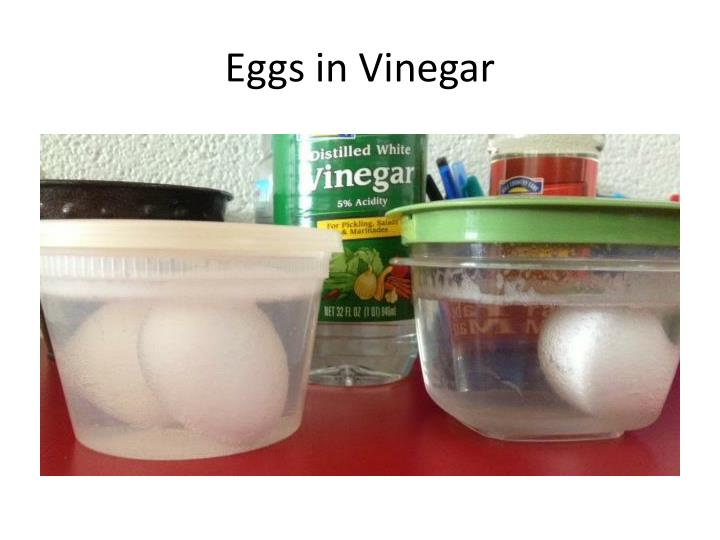 Eggs in Vinegar