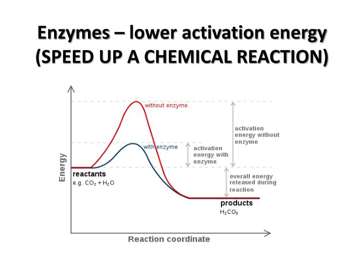 Enzymes – lower activation