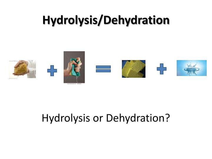 Hydrolysis/Dehydration