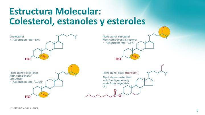 Estructura Molecular:
