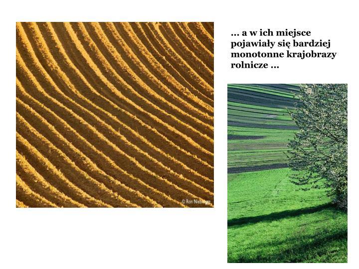 ... a w ich miejsce pojawiay si bardziej monotonne krajobrazy rolnicze ...