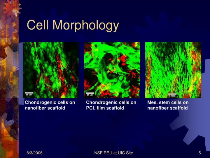 Cell Morphology