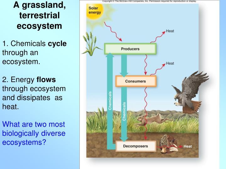 A grassland, terrestrial ecosystem
