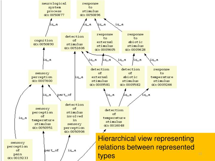 Hierarchical view representing relations between represented types