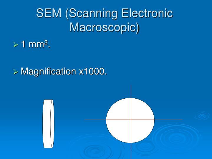 SEM (Scanning Electronic Macroscopic)
