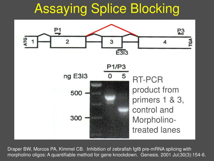 Assaying Splice Blocking