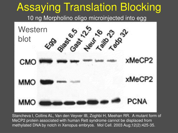 Assaying Translation Blocking