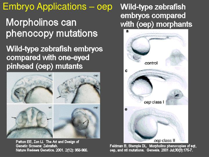 Embryo Applications – oep