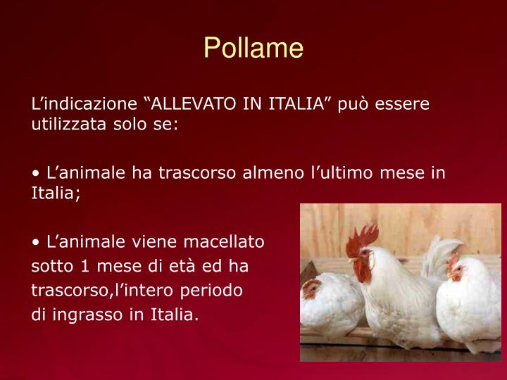 Pollame