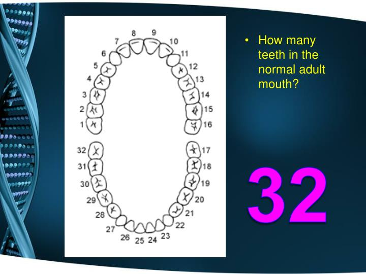 How many teeth in the normal adult mouth?