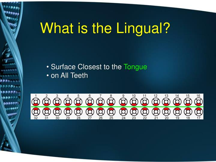 What is the Lingual?