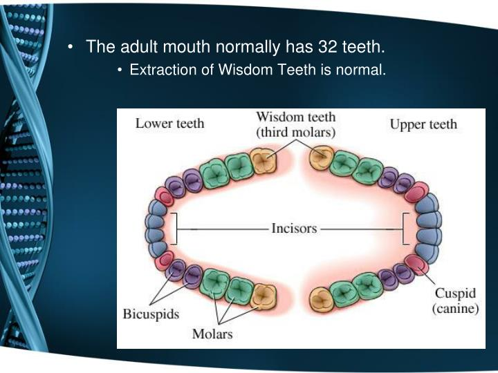 The adult mouth normally has 32 teeth.