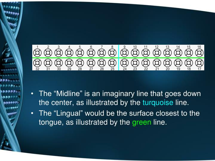 "The ""Midline"" is an imaginary line that goes down the center, as illustrated by the"