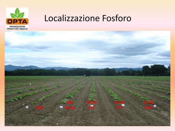 Localizzazione Fosforo