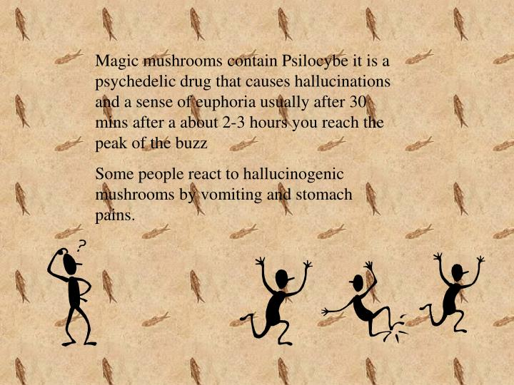 Magic mushrooms contain Psilocybe it is a psychedelic drug that causes hallucinations and a sense of euphoria usually after 30 mins after a about 2-3 hours you reach the peak of the buzz